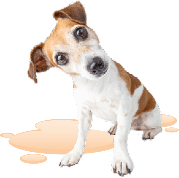 Hund freigestellt - DRUFF Absorber-Granulat