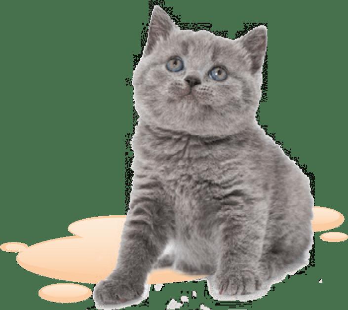 Katze freigestellt - DRUFF Absorber-Granulat